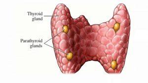 hormon tuyến cận giáp