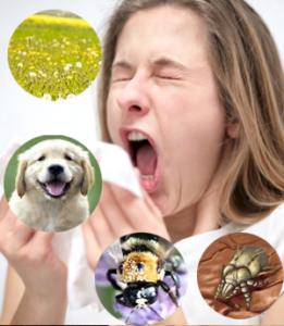 viêm mũi dị ứng, triệu chứng, nguyên nhân, cách điều trị,