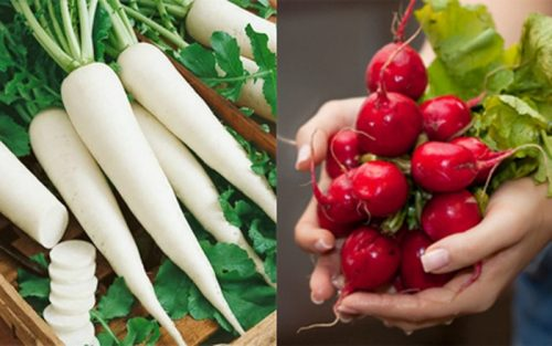 Củ cải đường có tác dụng giảm béo và giải độc cực tốt