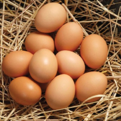 Trứng giàu canxi, vitamin D và khoáng chất
