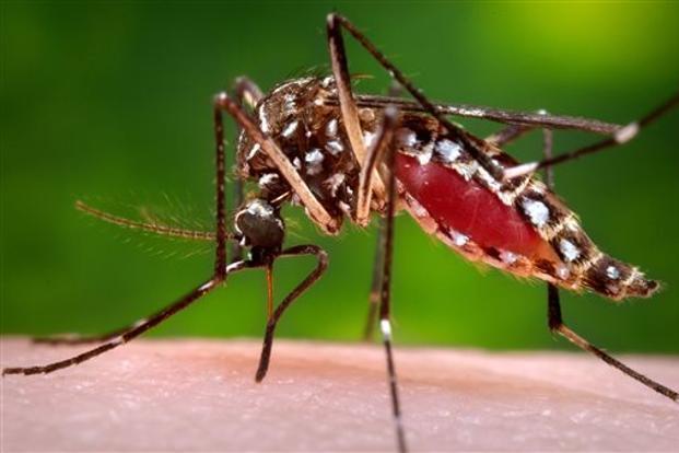 Muỗi Culex