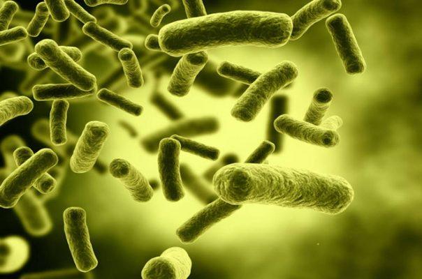 Vi khuẩn P.ance gây mụn trứng cá bọc