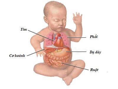 Dạ dày của trẻ dưới 6 tuổi nằm ngang