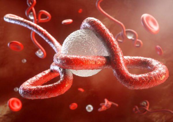 bệnh ebola