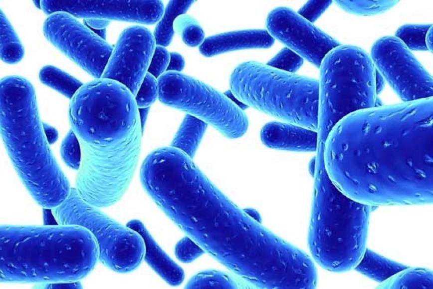 Men vi sinh là những vi khuẩn có lợi cho cơ thể, bảo vệ đường ruột trước các bệnh như tiêu chảy cấp, tiêu chảy do sử dụng kháng sinh