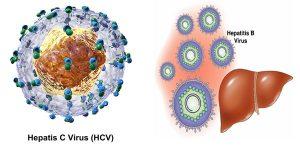 Virus viêm gan B, C