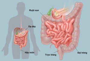 Người mắc các bệnh đường tiêu hóa không nên ăn mướp đắng (Ảnh internet)
