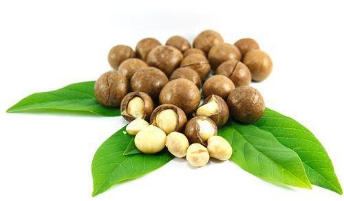 Hạt Macadamia- thực phẩm tốt cho tuyến tiền liệt