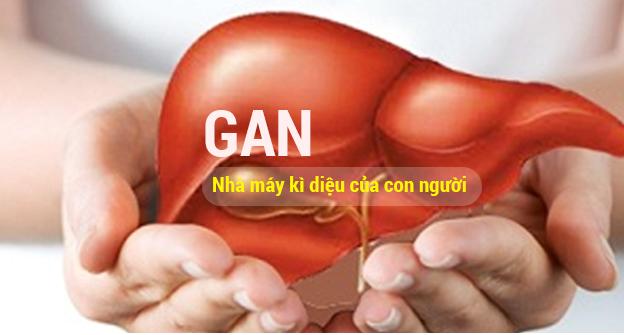 Vai trò của Gan