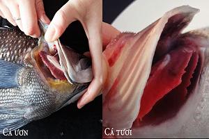 Phân biệt cá tươi và cá ươn