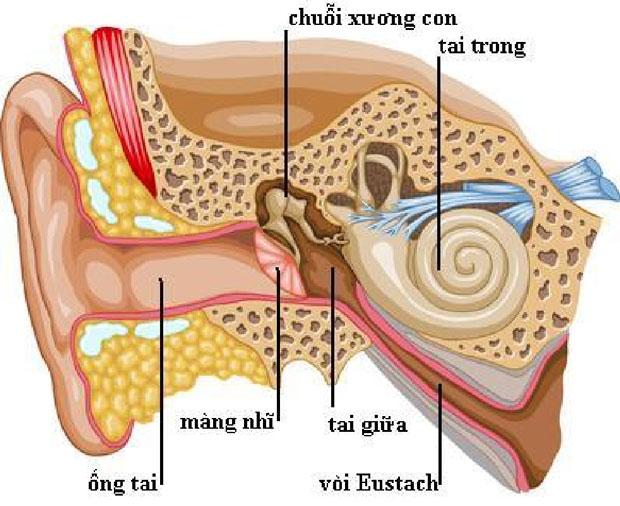 Tai giữa ngăn cách với ống tai ngoài bởi màng nhĩ