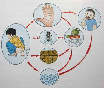Vi trùng gây bệnh tiêu chảy cấp cho trẻ qua đường phân - miệng