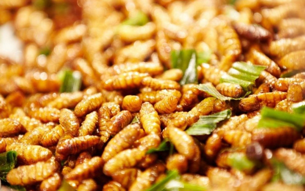 Nhộng tằm là một trong những loại thực phẩm rất tốt cho người bệnh gan nhiễm mỡ