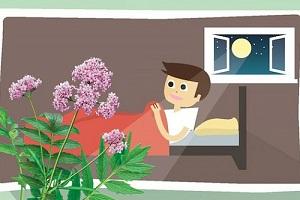 Cây nữ lang chữa mất ngủ hiệu quả