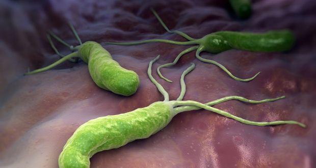 Helicobacter pylori sống trên niêm mạc dạ dày