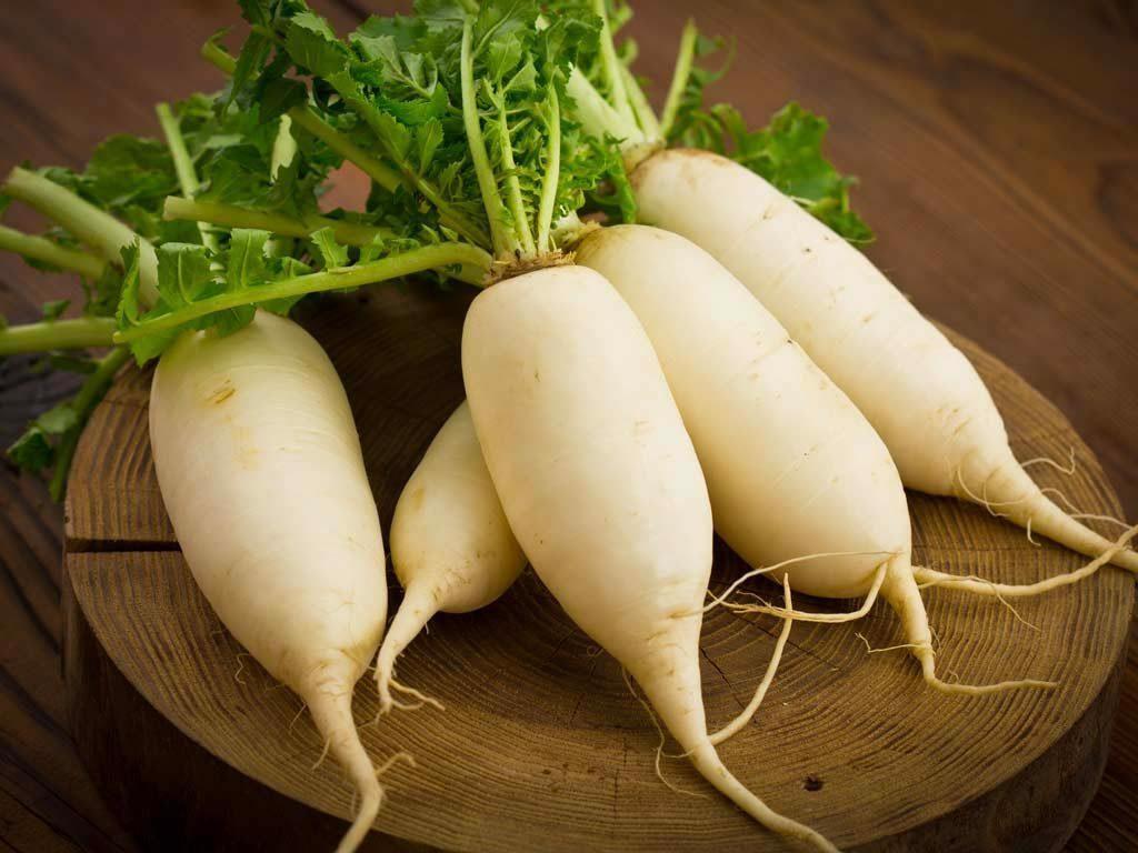 Cách trị ho cho trẻ là cho ăn củ cải trắng