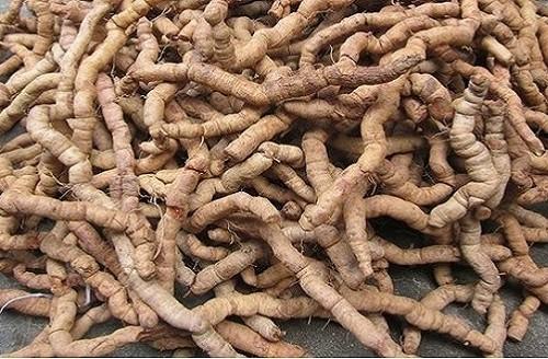 Rễ cây được sử dụng để chữa bệnh