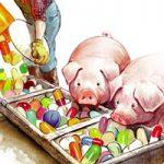 Sử dụng kháng sinh trong chăn nuôi gây ảnh hưởng như thế nào tới sức khỏe?