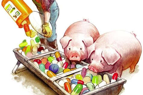 Sử dụng kháng sinh bừa bãi trong chăn nuôi gây nhiều hệ lụy tới sức khỏe