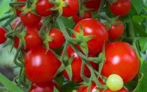 Cà chua tốt cho người bị tàn nhang (Ảnh: Internet)