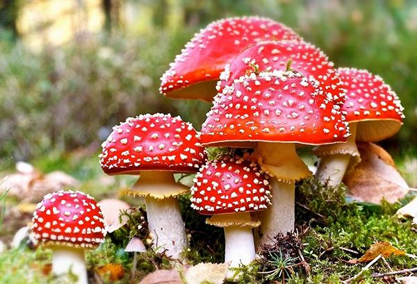 Nấm nhiều màu sắc dễ gây ngộ độc thực phẩm (Nguồn: internet)