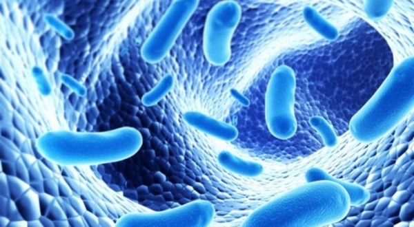 vi khuẩn đường ruột kháng thuốc