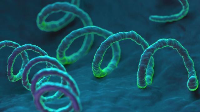 Xoắn khuẩn giang mai Treponema pallidum (Ảnh: internet)