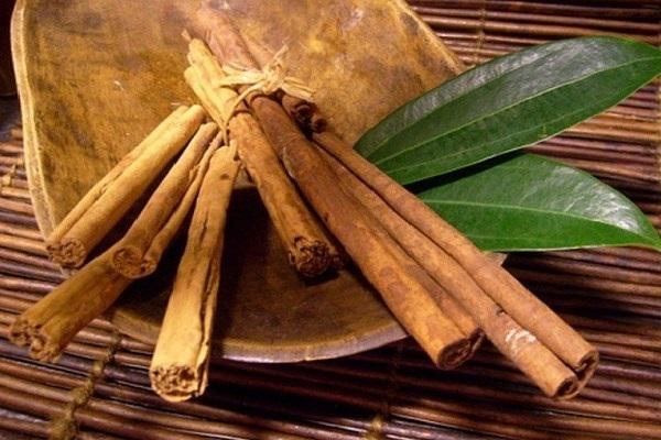Các vị thuốc được lấy từ cây quế, công dụng và liều dùng