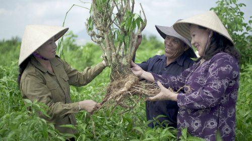 Bà Bảy Nga (bên trái) mời các nhà khoa học nghiên cứu về cây hoàn ngọc.