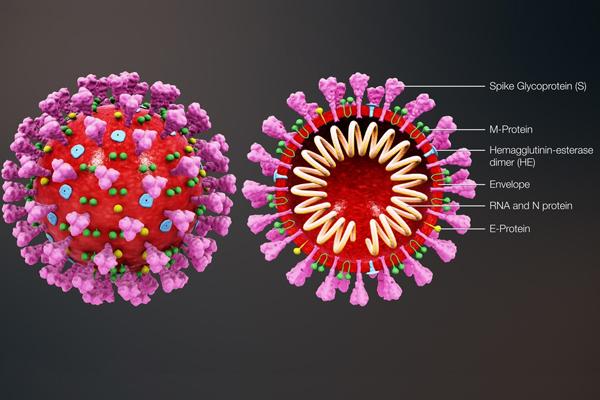Những hiểu biết về virus corona và dịch bệnh COVID-19