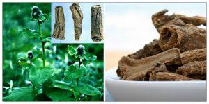 Rễ cây mộc hương