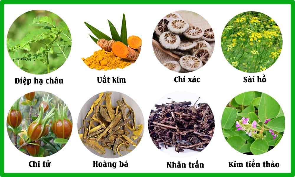 8 vị thuốc nam chữa sỏi mật hiệu quả nhất trong Đông y