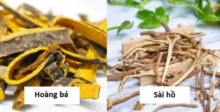 Hoàng bá, sài hồ là những cây thuốc Đông Y giúp ngăn sỏi túi mật hình thành