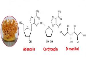 Cơ chế tác dụng của adenosine đối với cơ thể