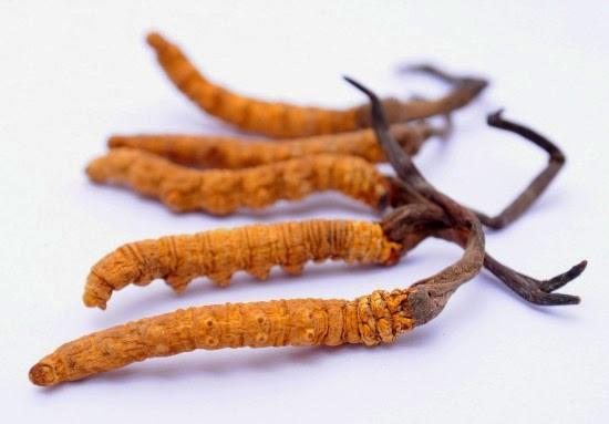 Người bệnh tiểu đường có uống được đông trùng hạ thảo