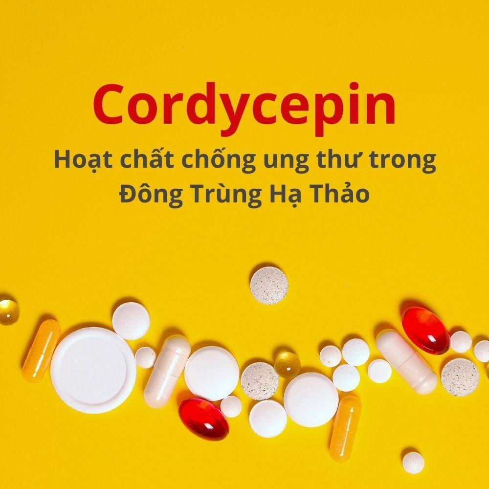 Cordycepin- hoạt chất quý có trong đông trùng hạ thảo