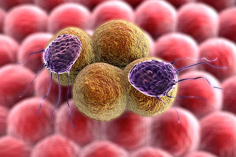 Đông trùng hạ thảo có những tác dụng gì trong điều trị ung thư