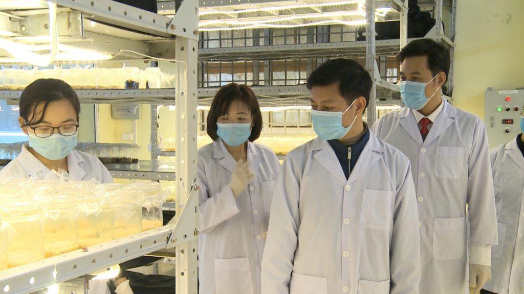 Phó Giáo sư – Tiến sỹ Trần Thị Thu Hà cùng lãnh đạo Sở khoa học và công nghệ tỉnh Hà Giang thăm quan khu nuôi trồng đông trùng hạ thảo